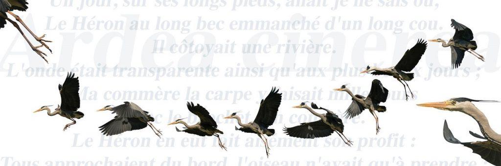 Dominique Drouet - Le Héron